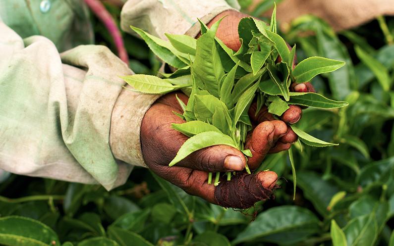 A Fairtrade celebration